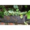 Foras Surmi Plant Pot