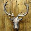 Geko Products Resin Deer Head Bust