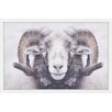 "Marmont Hill ""Majestic Curled Horns"" by Parvez Taj Framed Photographic Print"