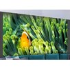 Artgeist Anemonefish 2.31m x 300cm Wallpaper