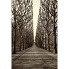Marmont Hill 'Tree Alley' by Jody Stuart Photographic Print on Wrapped Canvas