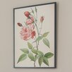 Andover Mills Rose Redoute Graphic Art