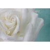 Marmont Hill 'Purity of the White Rose' by Judy Stalus Photographic Print on Wrapped Canvas