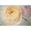 Marmont Hill 'Peach Ranunculus' by Judy Stalus Painting Print on Wrapped Canvas
