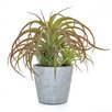Castleton Home Succulent Airplant in Pot