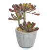Castleton Home Succulent Plant in Pot