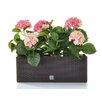 Castleton Home Hydrangea Floral Arrangements in Planter