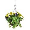 Castleton Home Pansy Hanging Floral Arrangements in Basket