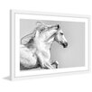 Marmont Hill 'White Mane' Framed Photographic Print on Paper