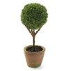 Hokku Designs Little Boxwood Plant in Planter