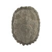 World Menagerie Ossified Gray Turtle Shell Sculpture