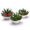 Hokku Designs Assorted Desk Top Plant in Pot
