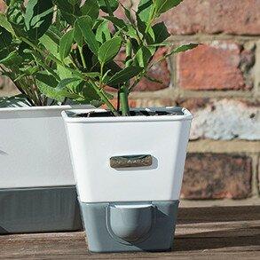 cole & mason indoor herb garden self-watering carbon steel pot