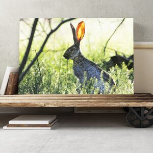 Hare in the Meadow Photographic Print on Canvas