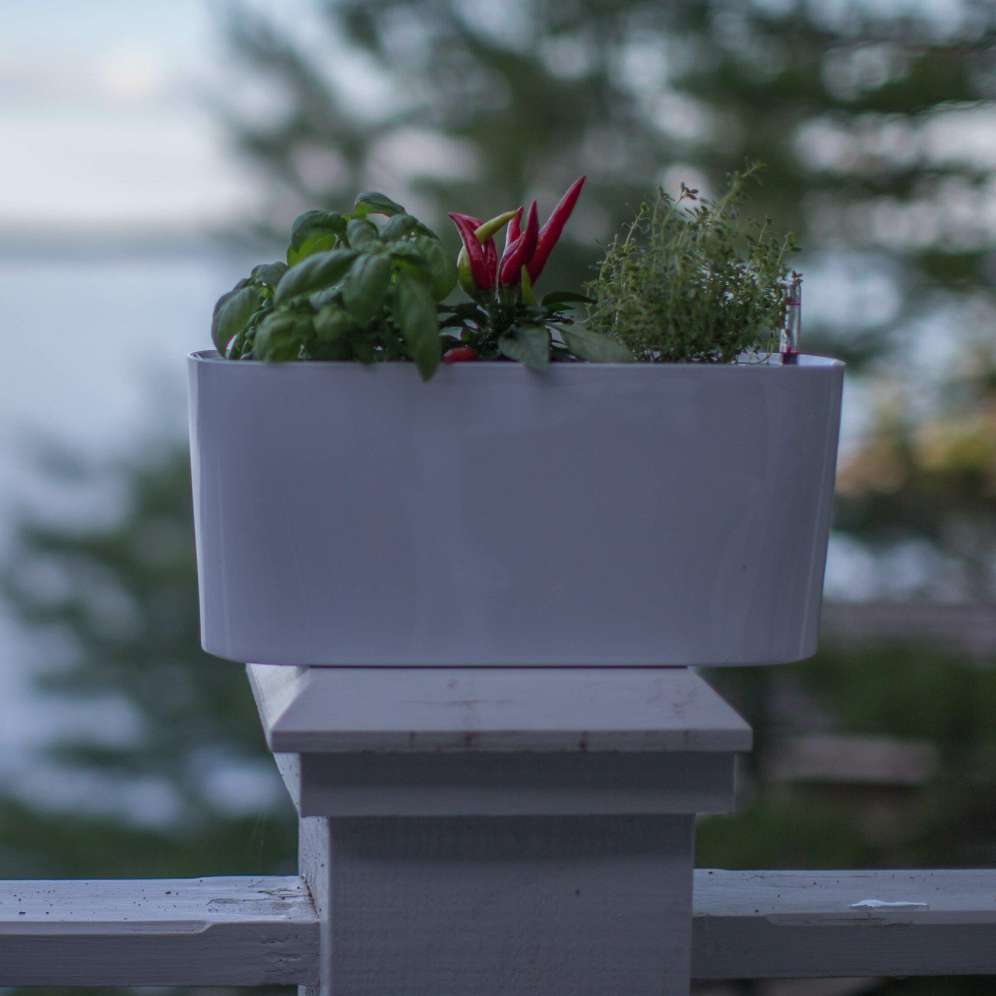 Algreen Modena Self Watering Plastic Planter Box Reviews