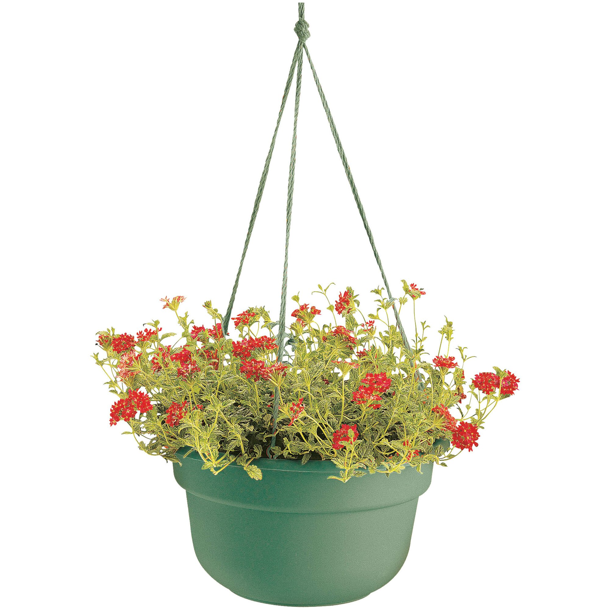 August Grove Leadore Self Watering Vinyl Hanging Planter