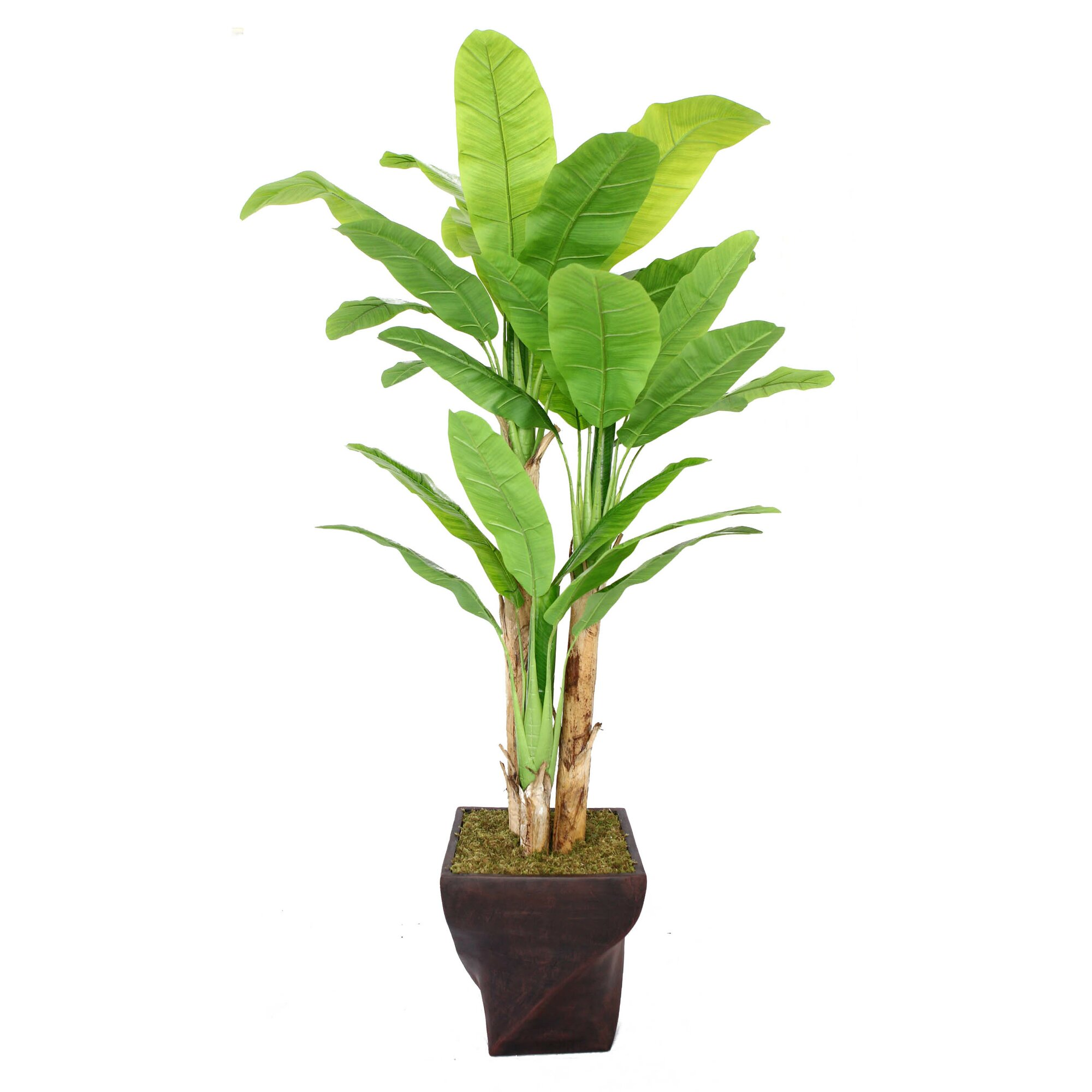 Laura Ashley Home Tall Banana Tree In Planter Amp Reviews