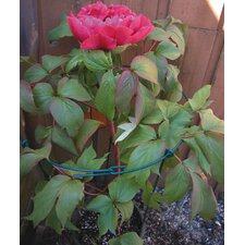Flower Plant Support (Set of 288)