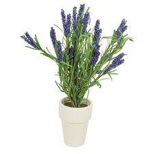 Lavender with Pot