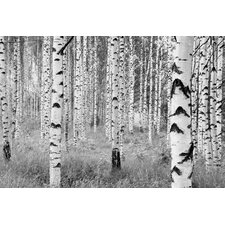 Komar Birch Forest Wall Mural