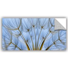 'Parachute Seed Panoramic' by Cora Niele Graphic Art on Canvas Wall Decal