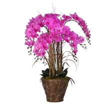 Orchid Arrangement in Fiberstone Pot