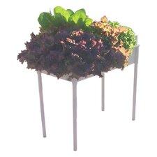 Hydroponic Soil Free Salad Grower
