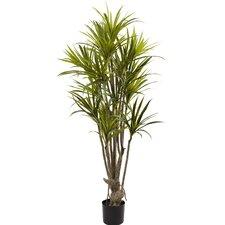 Dracaena Silk Tree in Pot