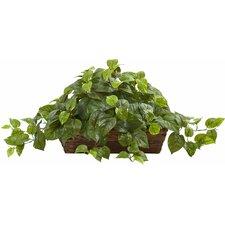 Pothos Desktop Plant in Ledge Basket
