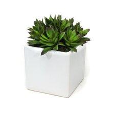 Succulents Desk Top Plant in Planter
