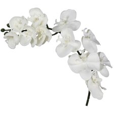 Magic Touch Single Stem Orchid