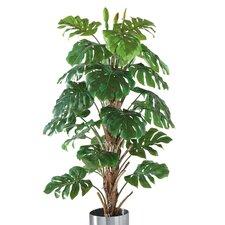 Philo Tree