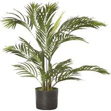 Areca Palm Tree Floor Plant