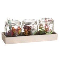 4 Piece Succulent Garden Desk Top Jar Set