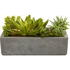 Succulent Floor Plant in Concrete Planter