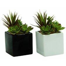 2 Piece Succulent Desktop Plant in Pot Set