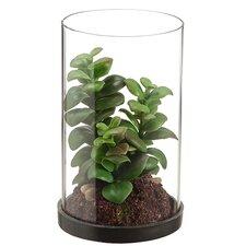 Desk Top Plant in Glass Hurricane