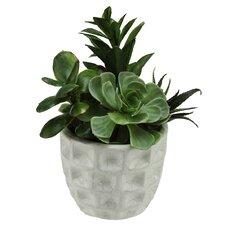 Artificial Mixed Succulent Desk Top Plant in Pot