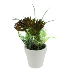 Artificial Succulent and Fern Spring Decoration Desk Top Plant in Pot