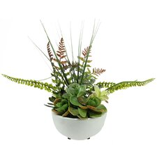 Artificial Mixed Succulent and Fern Desk Top Plant in Pot