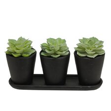 Artificial Echeveria Succulent Centerpiece Desk Top Plant in Pot