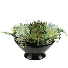 Artificial Mixed Succulent Desk Top Plant in a Bowl Pot