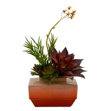 Assorted Succulents Desk Top Plant in Planter