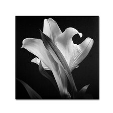 Lily Photographic Print on Wrapped Canvas
