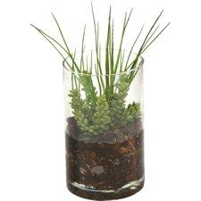 Gillian Succulent Grass in Pot