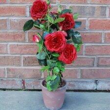 Damask Rose with Terra Pot