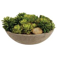 Allis Potted Mixed Succulents