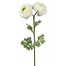 Single Ranunculus Flower Stem