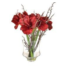Amaryllis  Floral Arrangements in Vase