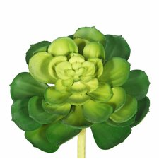 Cactus Succulent Plant (Set of 6)